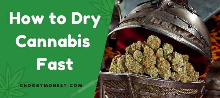 How to Dry Cannabis Fast
